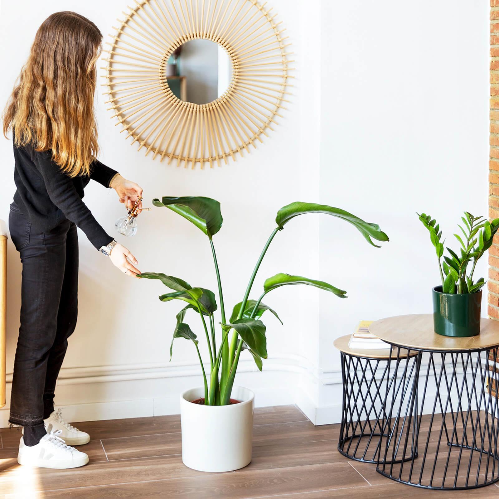 planta xl