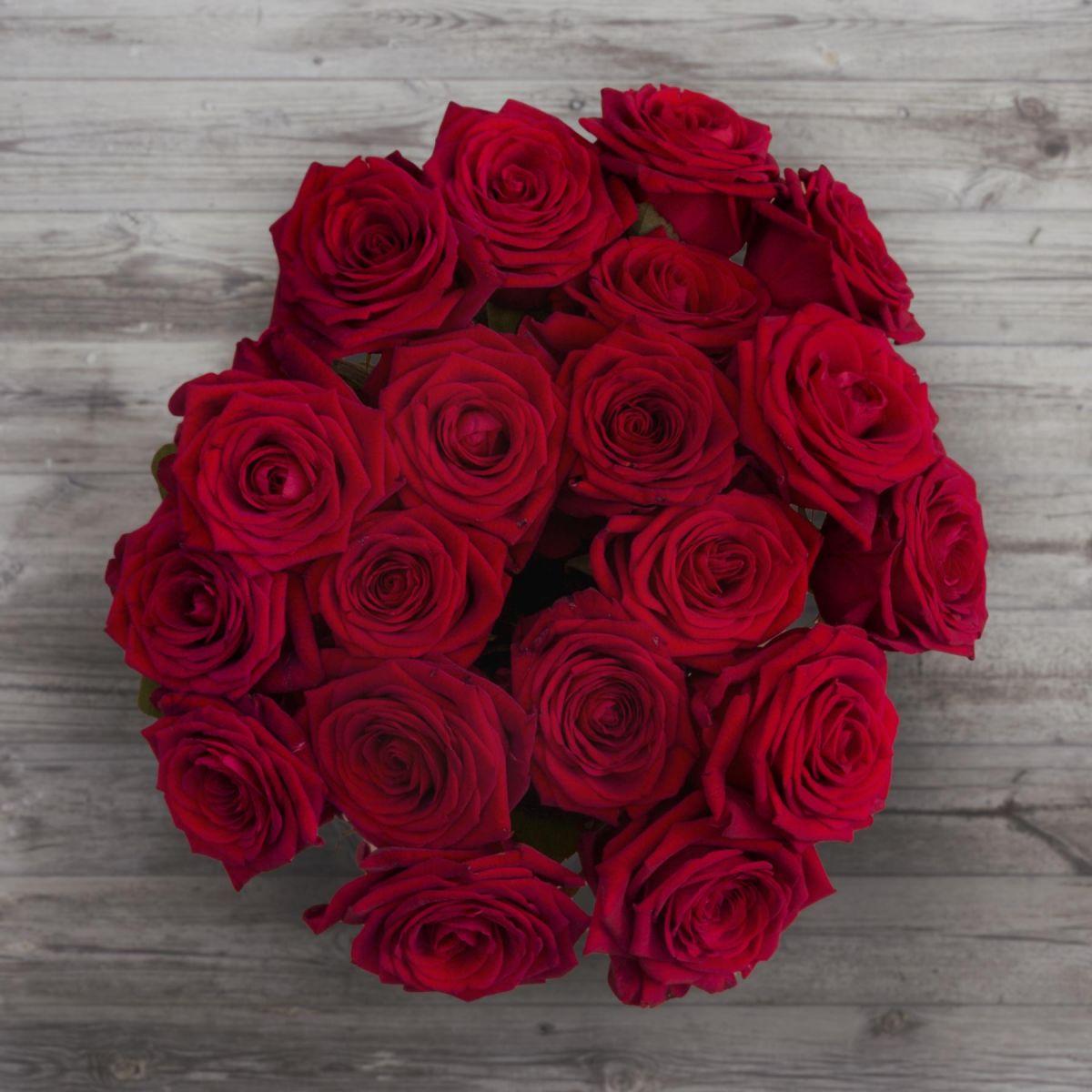 Loving Red Roses