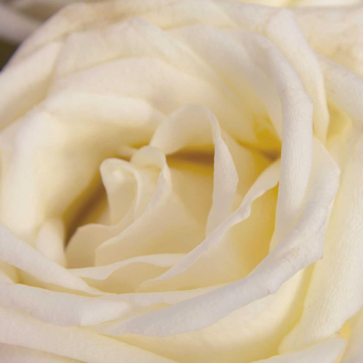 White Naomi