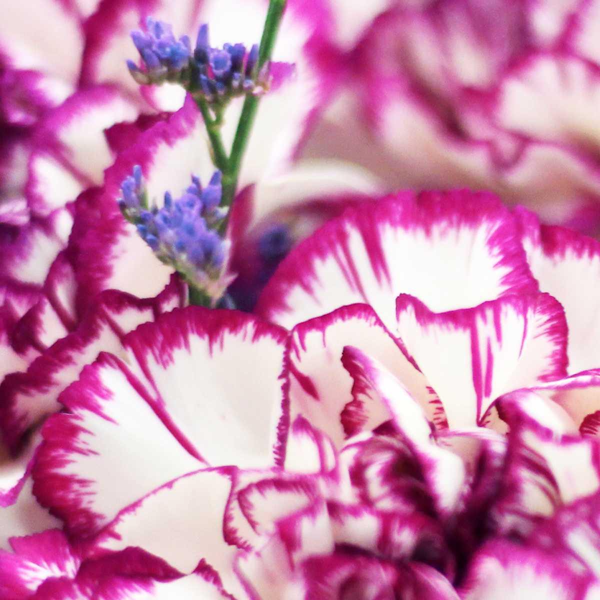 Ramo de flores violet hill the colvin co flores por - The colvin co ...