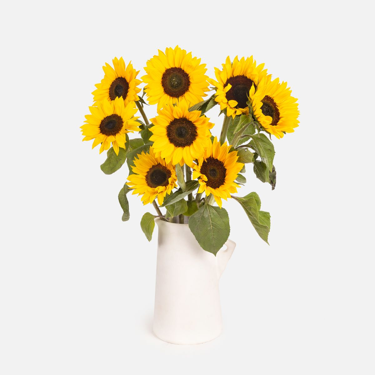 Yellowholic
