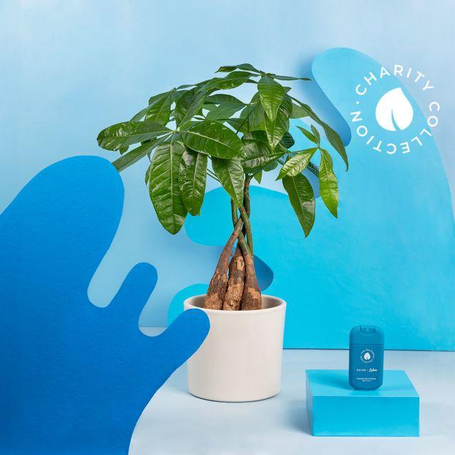 Aqua Pack (Pamela + HAAN limpiador manos)