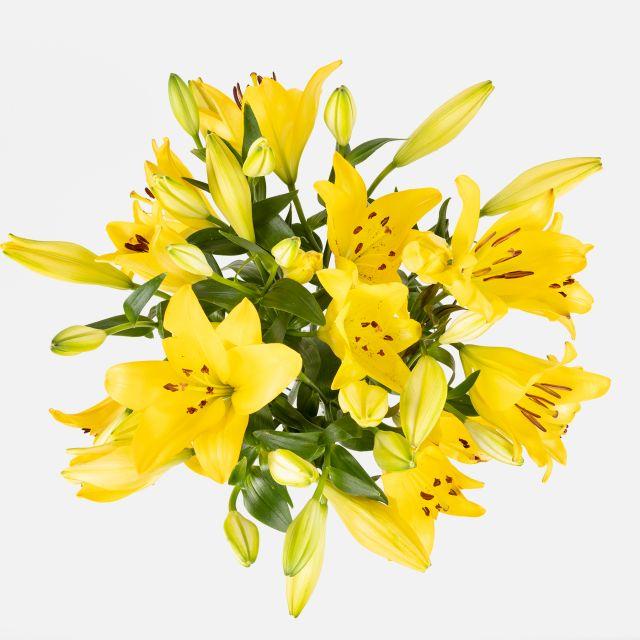 Enviar ramo a domicilio de lirios amarillos