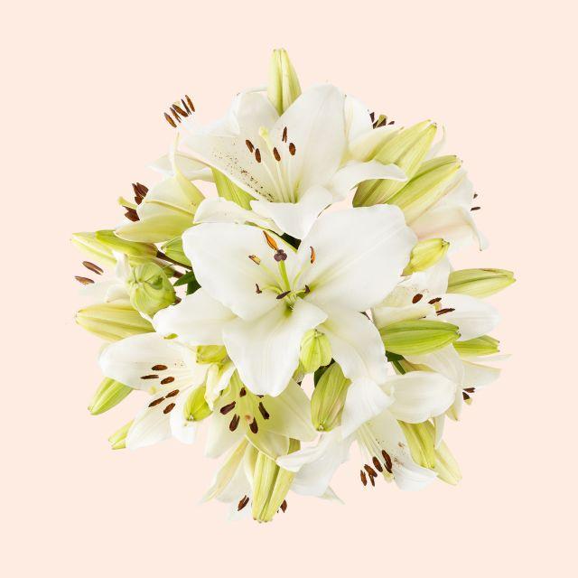 Online weiße Lilien versenden