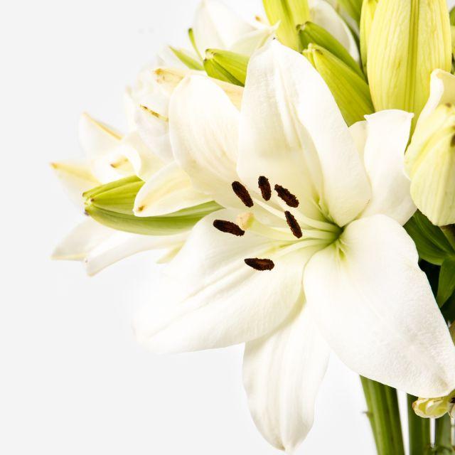 Blumenstrauß mit weißen Lilien zum Muttertag versenden