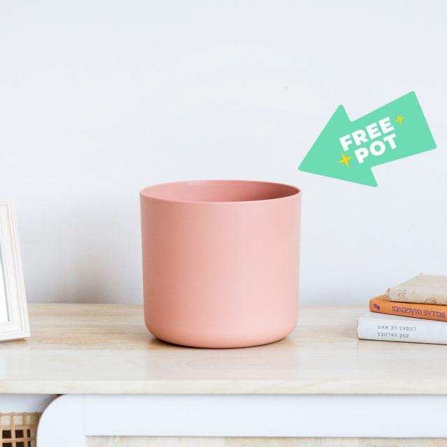 pianta online con vaso in regalo