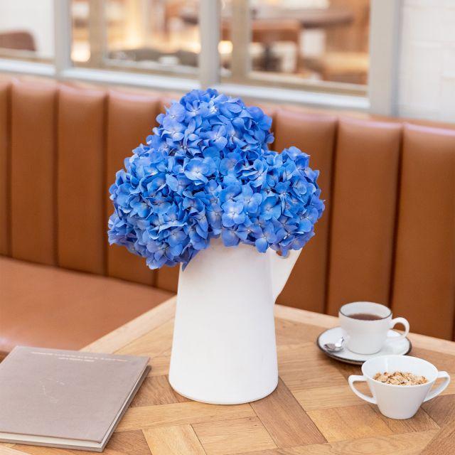 Colvin blaue Hortensien