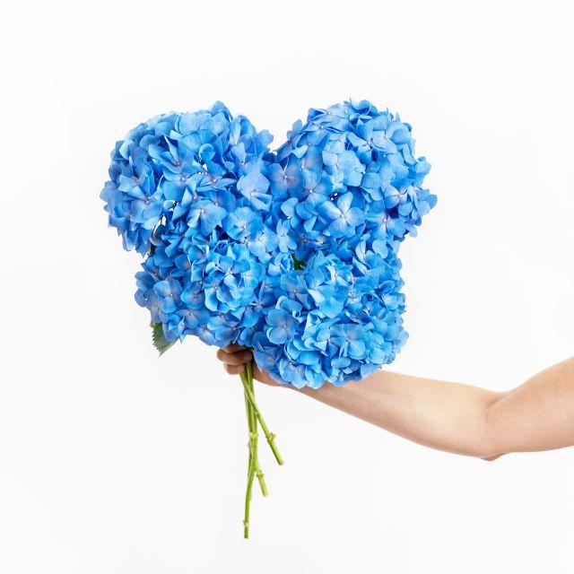 blaue Hortensien online