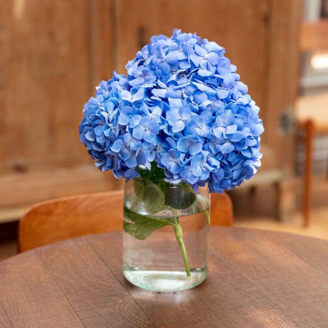 Blaue Hortensien zu dir nach Hause schicken