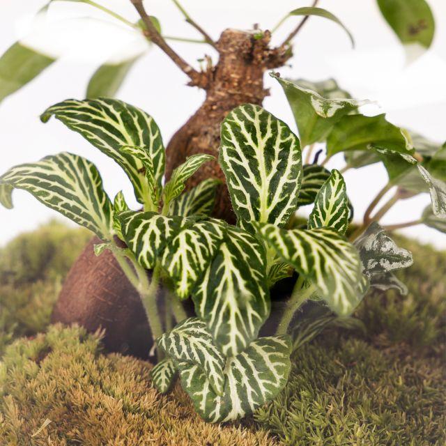 Comprar jardin eterno plantas online