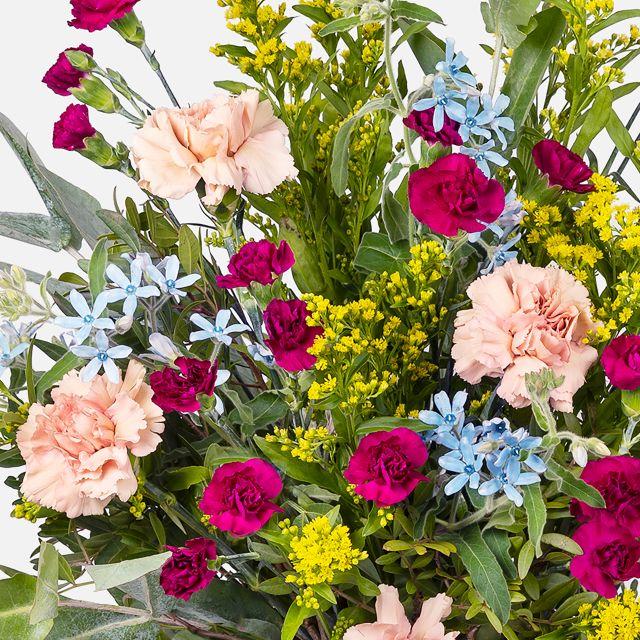 Comprar planta anthurium y vela aromática