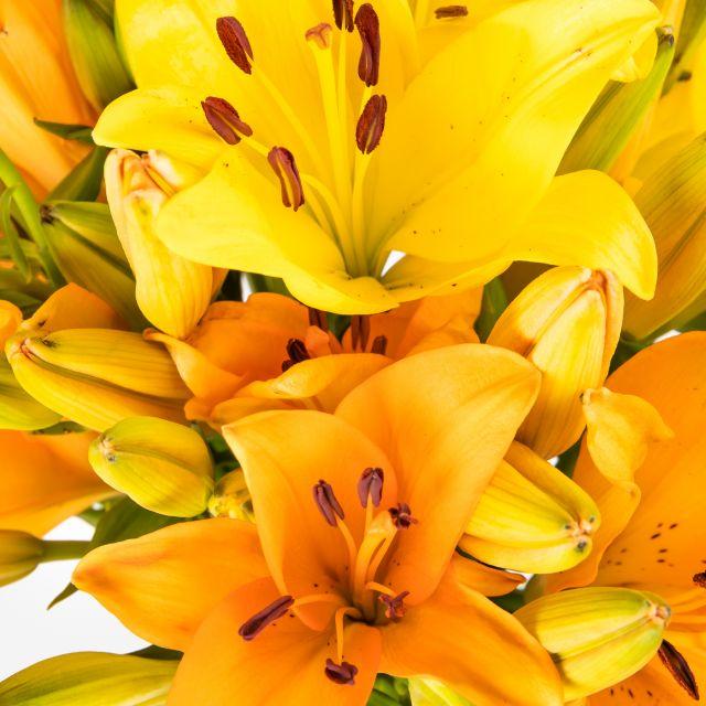 Envio a domicílio de lírios amarelos e laranjas