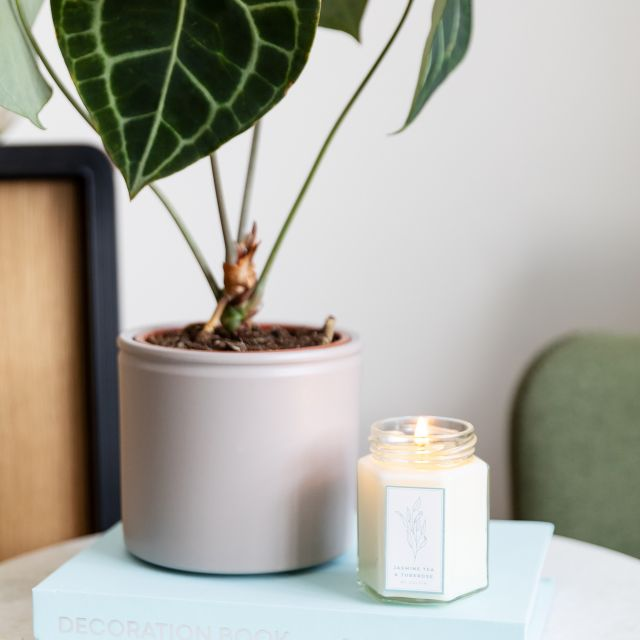 Comprar Anthurium Clarinervium planta online