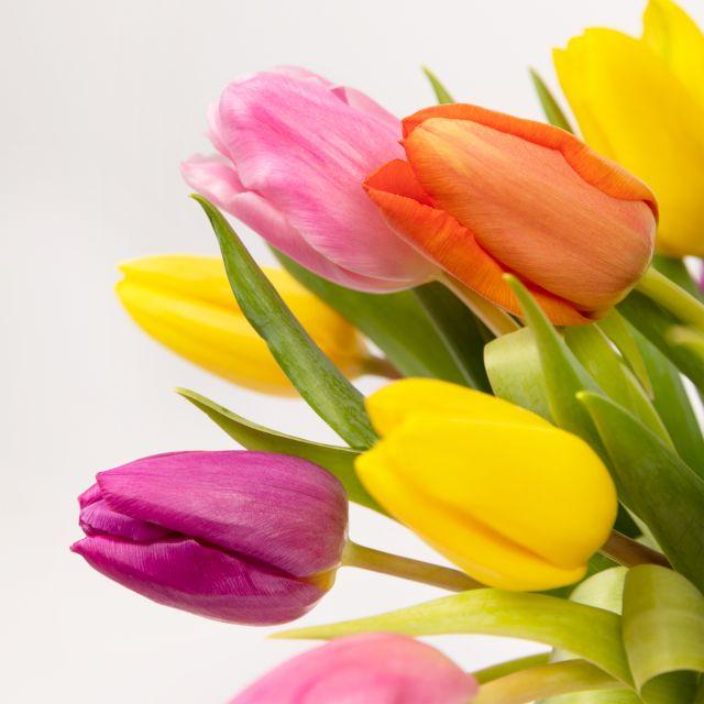Consegna a domicilio di tulipani rosa, gialli e viola