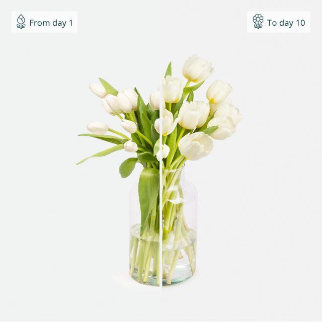Envio a domicilio de tulipanes blancos