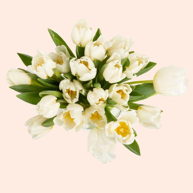 Enviar online tulipanes blancos