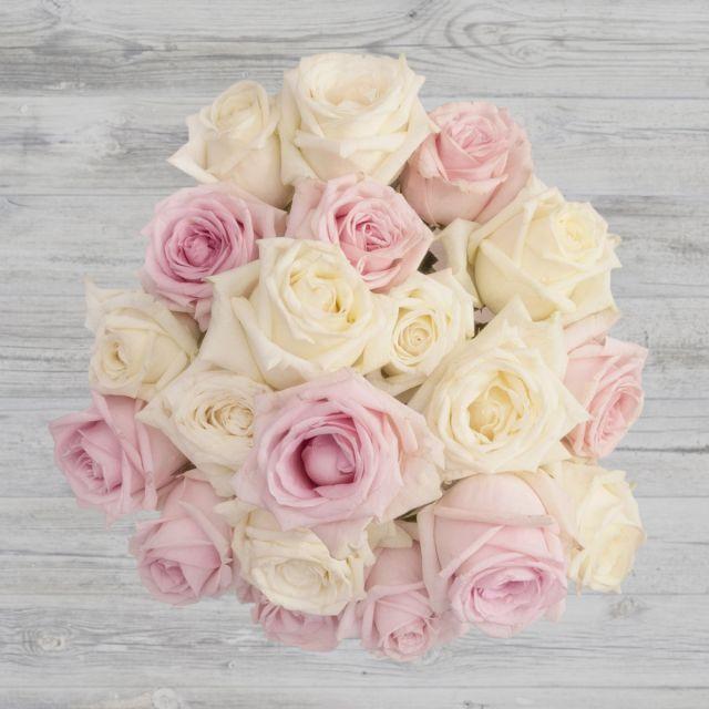 Dear Rose