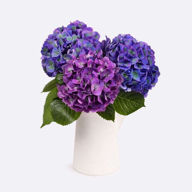 Ramo de hortensias púrpura Colvin