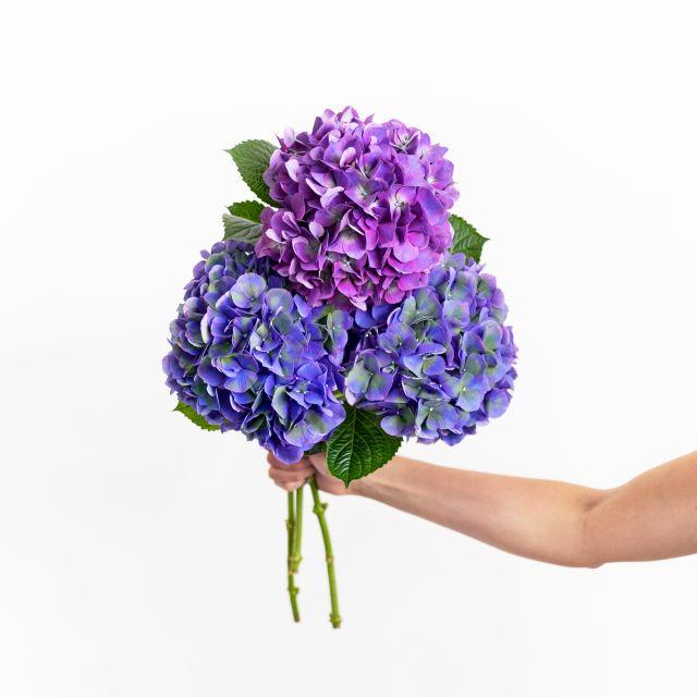 Inviare bouquet di ortensie viola