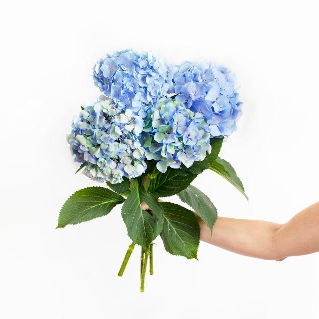 Bouquet di ortensie azzurre