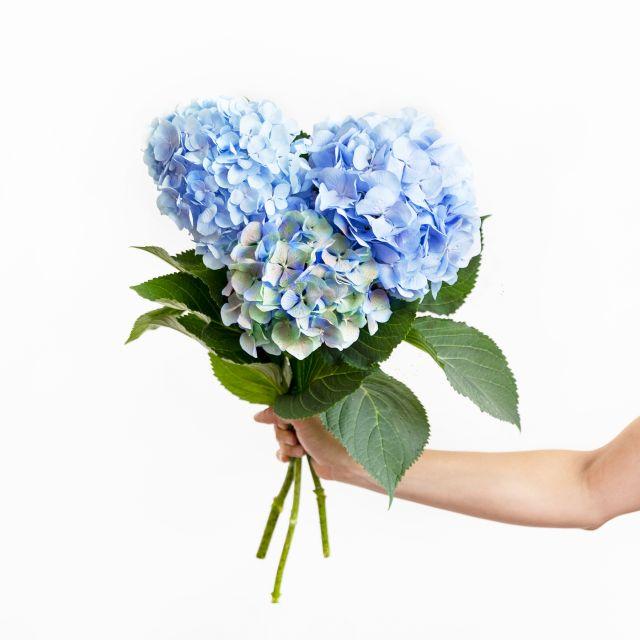 Inviare bouquet di ortensie azzurre