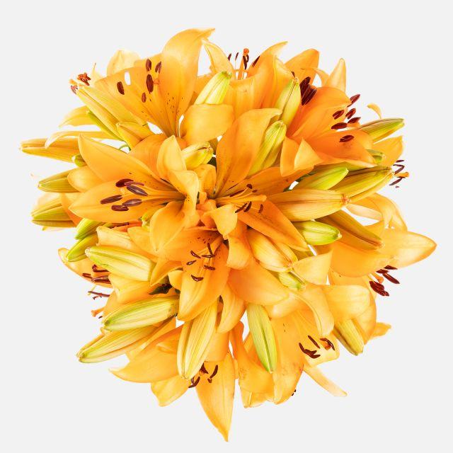 Blumenstrauß aus orangefarbenen Lilien verschicken