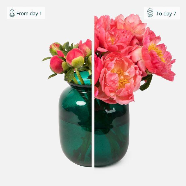 Corallo bouquet di peonie
