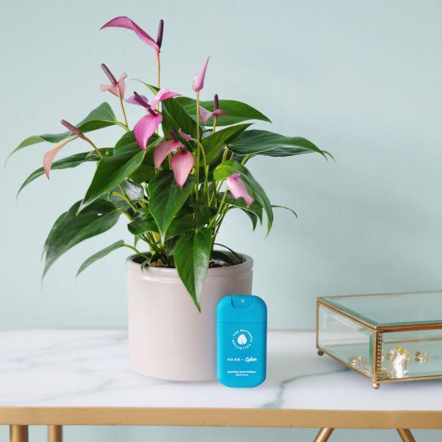 Lagoon Pack (Lilac + HAAN limpiador manos)