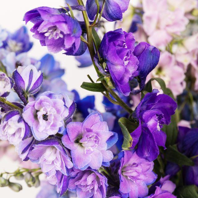 Bouquet di fiori con delphiniums