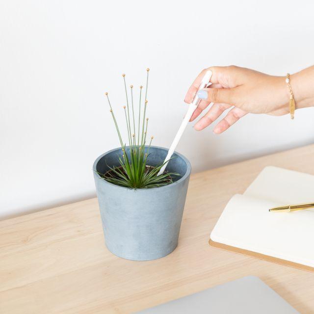 Mikado Pflanze nach Hause bestellen