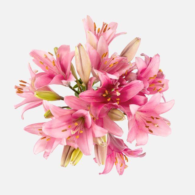 Invia un bouquet di gigli rosa a domicilio