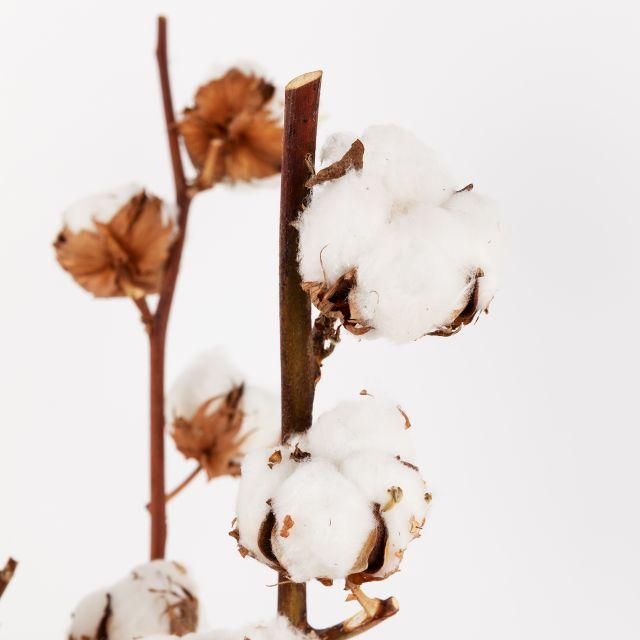 Ramo de flores Nordic Cotton