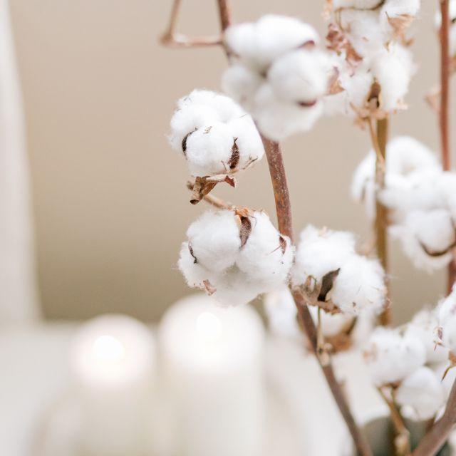 Nordic Cotton - 1