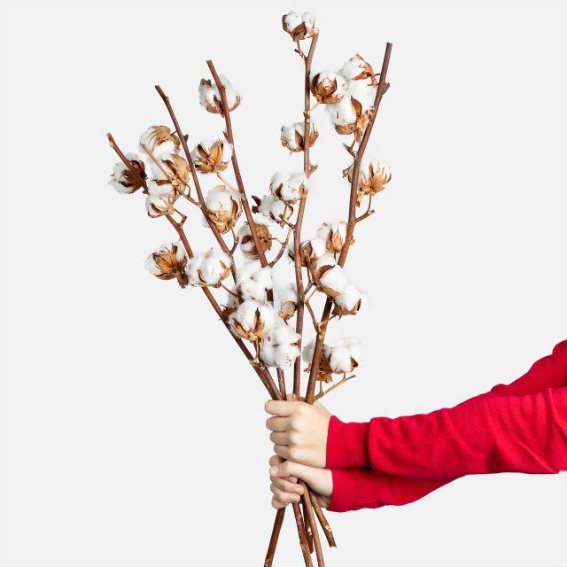 Enviar online ramo de flores Nordic Cotton