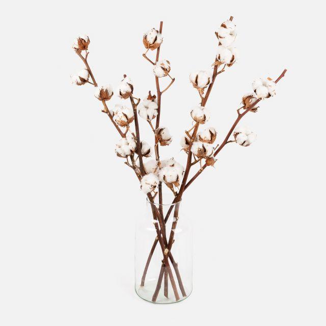 Envío online de ramo de flores con algodón