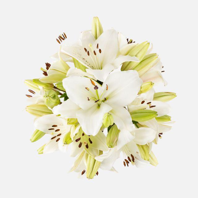 Inviare bouquet di gigli bianchi a domicilio
