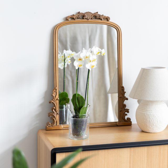 Weiße Orchidee zum Muttertag kaufen