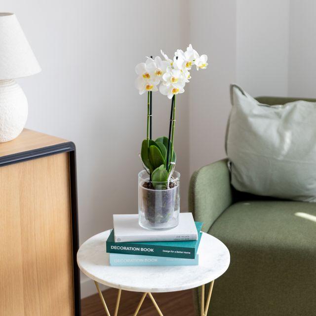 Weiße Orchidee nach hause versenden