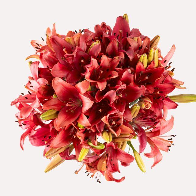 Bouquet di gigli rossi Original Love Colvin