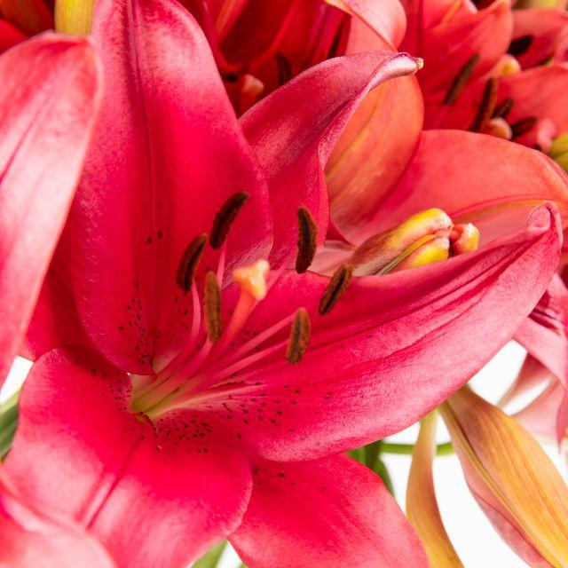 Inviare bouquet di gigli rossi