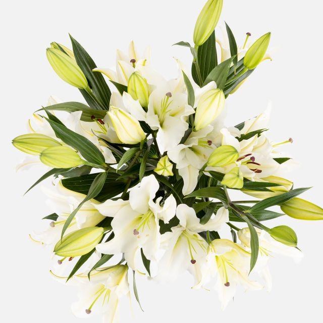 Strauß mit weißen orientalischen Lilien nach Hause schicken