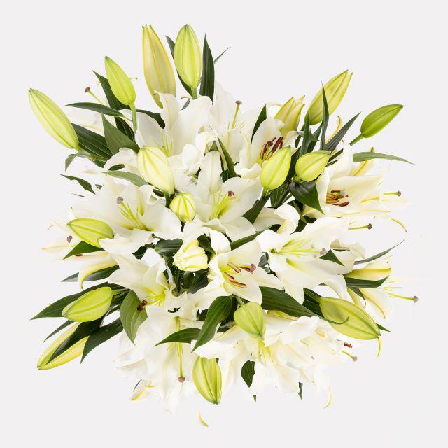 Schicken weiße orientalische Lilien zu dir nach Hause