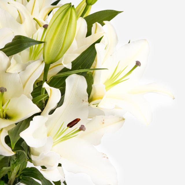 Verschicke einen Strauß weißen orientalischen Lilien