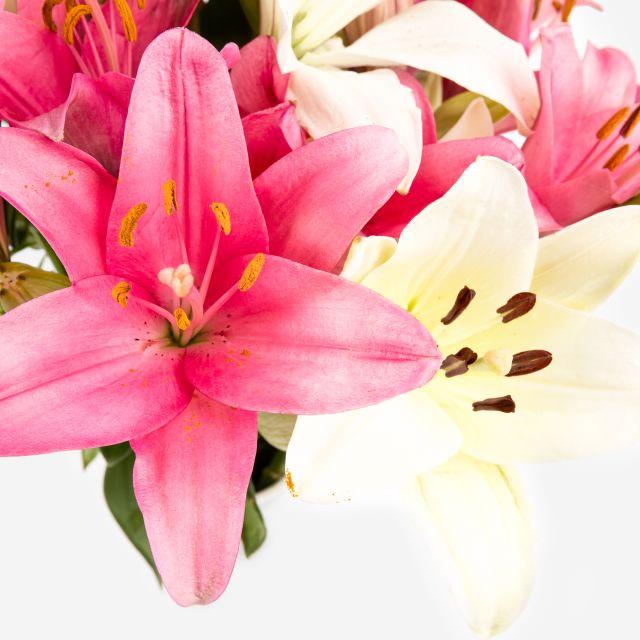 Strauß mit weißen und rosa Lilien nach Hause schicken