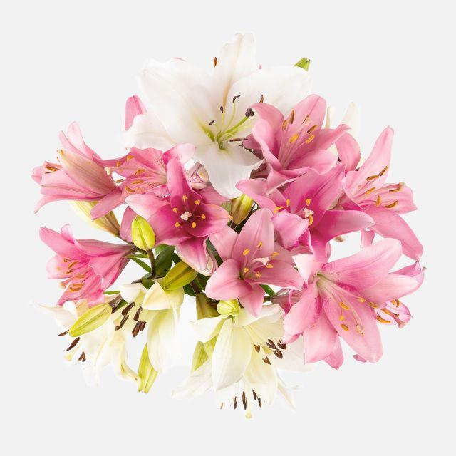 Blumenstrauß aus natürlichen Blumen mit weißen und rosafarbenden Lilien