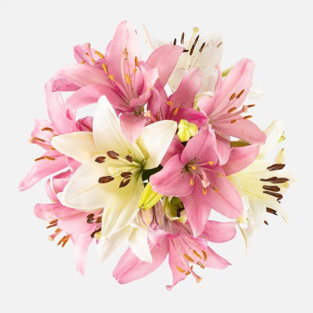 Weiße und rosa Lilien online kaufen