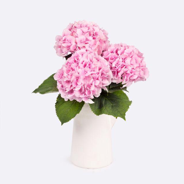 Blumenstrauß aus rosa Hortensien Colvin
