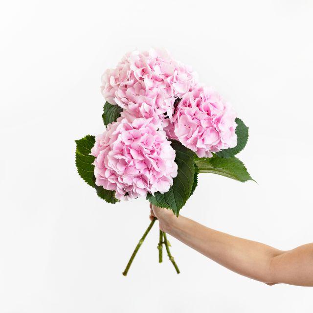 Inviare bouquet di ortensie rosa