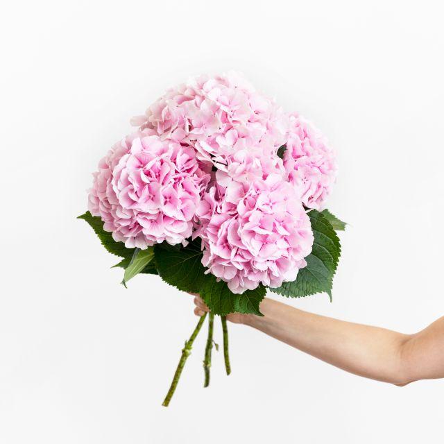 Bouquet di ortensie rosa