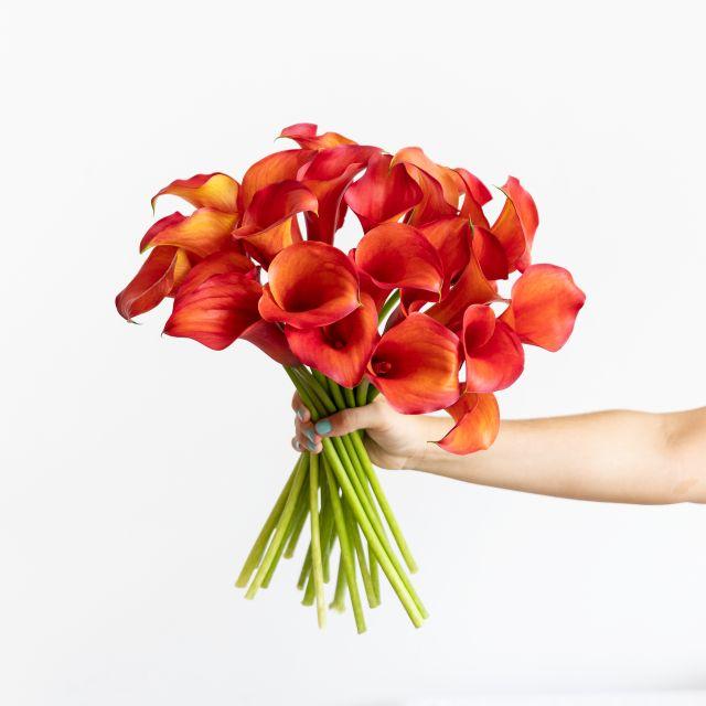 Blumenstrauß aus orangefarbenen Calla-Lilien online versenden